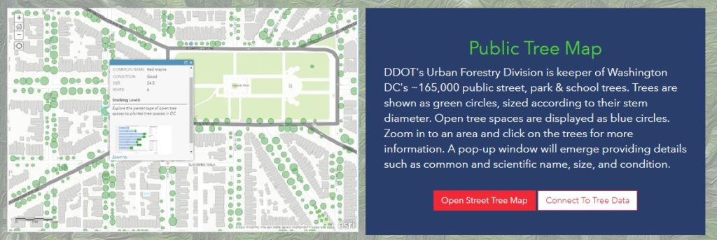 public tree map
